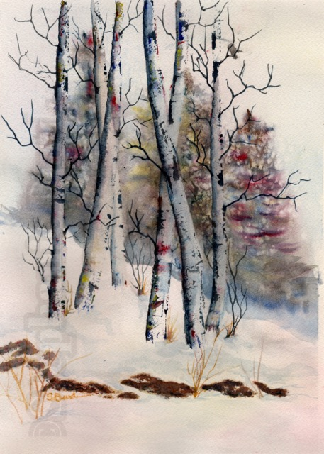 Aspens Winter by Stephanie Burd