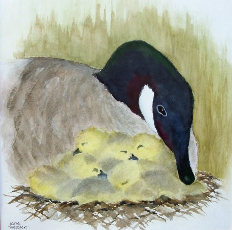 Watercolor of a Canadian goose and her hatch