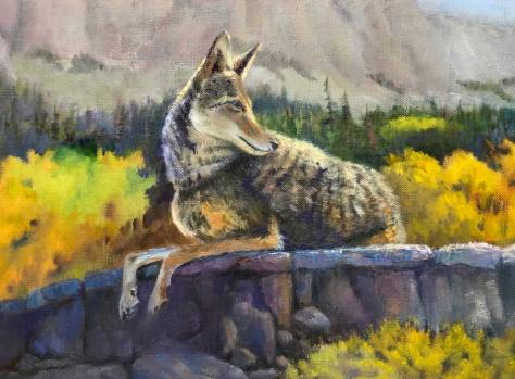 Highcountrycoyote